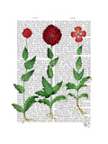 Italian Carnation 2 Poster by  Fab Funky