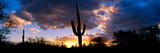 Saguaro Cactus, Sunset, Tucson Photographic Print by Panoramic Images