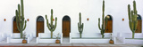 View of Cardon Cactus Plants Outside a Building, Todos Santos, Baja California Sur, Mexico Photographic Print by Panoramic Images