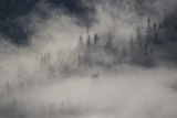 Low-Lying Clouds and Fog over an Evergreen Forest Photographic Print by Bob Smith
