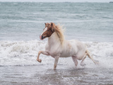 Horse Running on Coastline, Iceland Photographic Print by Green Light Collection