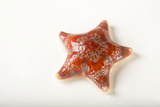 A Pink Leather Starfish at the National Mississippi River Museum and Aquarium in Dubuque, Iowa Photographic Print by Joel Sartore