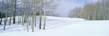 Winter Scene, Colorado Photographic Print by Panoramic Images