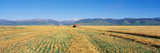 Tractor Mowing Fields Photographic Print by Panoramic Images
