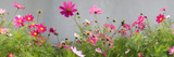 Close-Up of Flowers Photographic Print by Panoramic Images