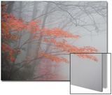 Fog Blurs a Forest in Autumn Prints by Tom Murphy