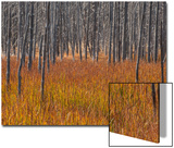 Marsh Grasses in a Forest in Autumn Poster by Tom Murphy