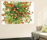 Moss Rose Flowers, Portulaca Species Wall Mural by Robert Llewellyn