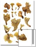 Brazilian 'Coconut Flower' Mushrooms Glow in the Dark Poster by David Liittschwager