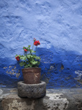 A Colorful Blue Wall and a Red Geranium in a Pot Inside the Santa Catalina Monastery Metal Print by Gabby Salazar