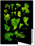 Brazilian 'Coconut Flower' Mushrooms Glow in the Dark Prints by David Liittschwager