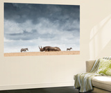 A Black Rhinoceros in Solio Rhino Sanctuary Bookended by Two Plains Zebras Wall Mural by Robin Moore
