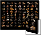 Composite of 90 Different Species of Primates Poster by Joel Sartore