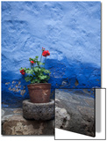 A Colorful Blue Wall and a Red Geranium in a Pot Inside the Santa Catalina Monastery Prints by Gabby Salazar