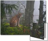 A European Lynx, Lynx Lynx, Sitting on a Mossy Boulder in a Foggy Forest Posters by Sergio Pitamitz