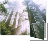 Light Source, Del Norte Coast Redwoods, California Coast, Humboldt Posters by Vincent James