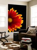 A Fire Wheel Flower, Gaillardia Pulchella Wall Mural by Joel Sartore