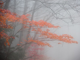 Fog Blurs a Forest in Autumn Metal Print by Tom Murphy