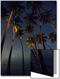 Starry Night in the Kapuaiwa Coconut Grove, Molokai Poster by Jonathan Kingston