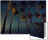 Starry Night in the Kapuaiwa Coconut Grove, Molokai Prints by Jonathan Kingston