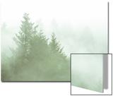 Fog Art Impressions Nature Detail Prints by Vincent James