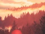 Sun Burned Fog Mount Tamalpais, Marin County, San Francisco Metal Print by Vincent James