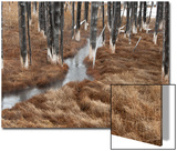 Marsh Grass Grows in a Forest around a Thermal Runoff Channel Prints by Tom Murphy