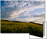 Clouds over a Field of Morning Glory Wildflowers Posters by Michael Forsberg