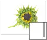 Unopened Sunflower, Helianthus Annuus Print by Robert Llewellyn