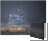 A Fallow Deer Makes a Dash Through the Forest at Sunrise in Richmond Park, London Plakater af Alex Saberi