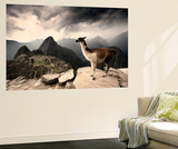 A Llama Overlooks the Pre-Columbian Inca Ruins of Machu Picchu Wall Mural by Jim Richardson