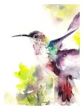 Hummingbird Poster by  CanotStop