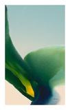 Flora 9 Prints by Bassmi Ibrahim