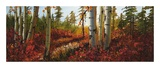 Aspens and Red Prints by Katherine McNeill