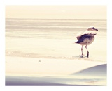 Bird at The Beach Prints by Sylvia Coomes