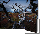 A Patagonia Scenic of the Andes Mountains, Weathered Dead Tree Branches, Clouds, and Vegetation Plakater