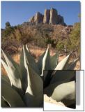 A Century Plant, Agave Harvardiana, and Casa Grande Rock Formation in Big Bend National Park Kunst af Phil Schermeister