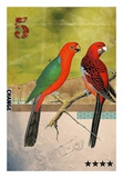 Uccelli Poster di Elo Marc
