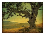 Blue Oak Hilltop Posters by William Guion