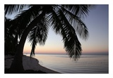 Palm Tree Sunset Poster by Brent Anderson