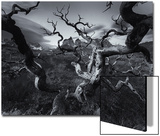 A Patagonia Scenic of the Andes Mountains, Weathered Dead Tree Branches, and Dramatic Clouds Poster