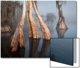 Swamp Cypress in Lake Russell, One of the Last Remaining Undeveloped Lakes in Central Florida Posters by Carlton Ward