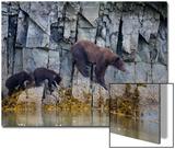 Adult Brown Bear, Ursus Arctos, with Juvenile Cubs Posters af Roy Toft