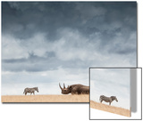 A Black Rhinoceros in Solio Rhino Sanctuary Bookended by Two Plains Zebras Prints by Robin Moore