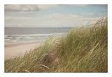 Beach Grass I Prints by Irene Suchocki
