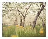 Quiet Orchard Print by Irene Suchocki