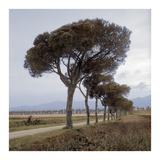 Tuscan Fatorria Strada No. 1 Prints by Alan Blaustein