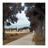 Tuscan Fatorria Strada No. 2 Art by Alan Blaustein