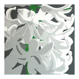 White Hyacinth Prints by Susan Porter