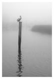 On Pelican Marsh Prints by Winthrope Hiers